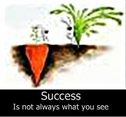 success carrot-crop